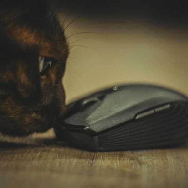 Играй где угодно. Обзор мышки Razer Atheris (DSC 6268)