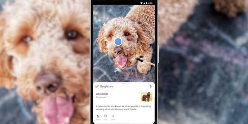 Google Lens научился распознавать миллиард вещей (google lens dog 1.0.png)