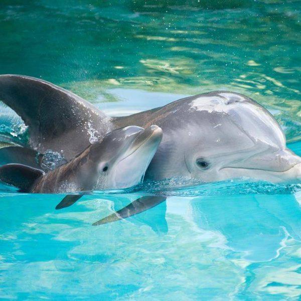 Натали Портман озвучит документальный фильм о дельфинах для стримингового сервиса Disney+ (delfin i delfinenok foto)