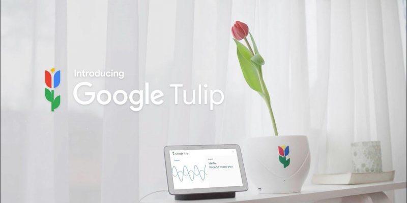 1 апреля: умное устройство Google Tulip научилось разговаривать с растениями (maxresdefault 6)