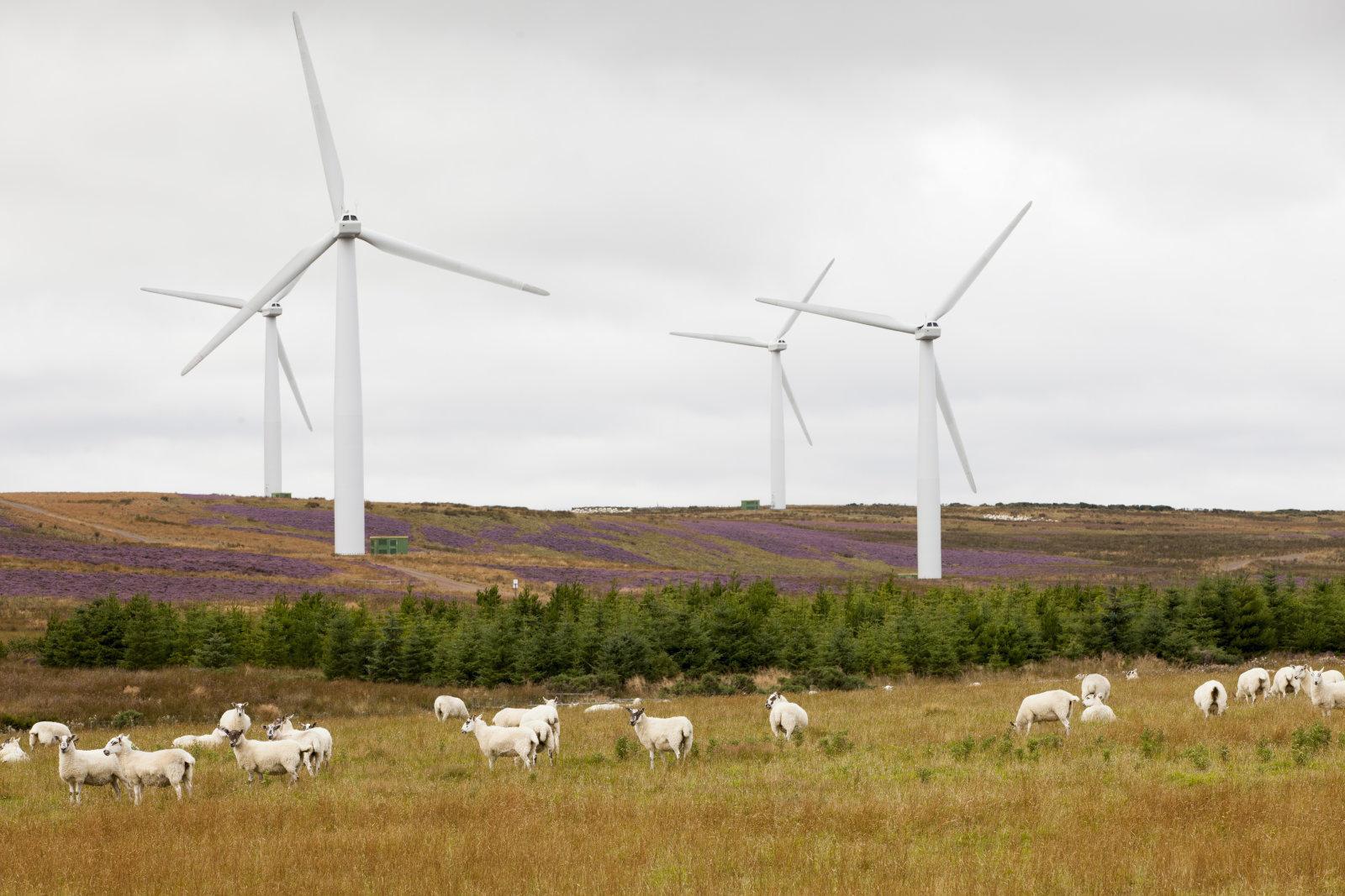 Шотландия переходит на возобновляемые источники энергии (dims 3 1)