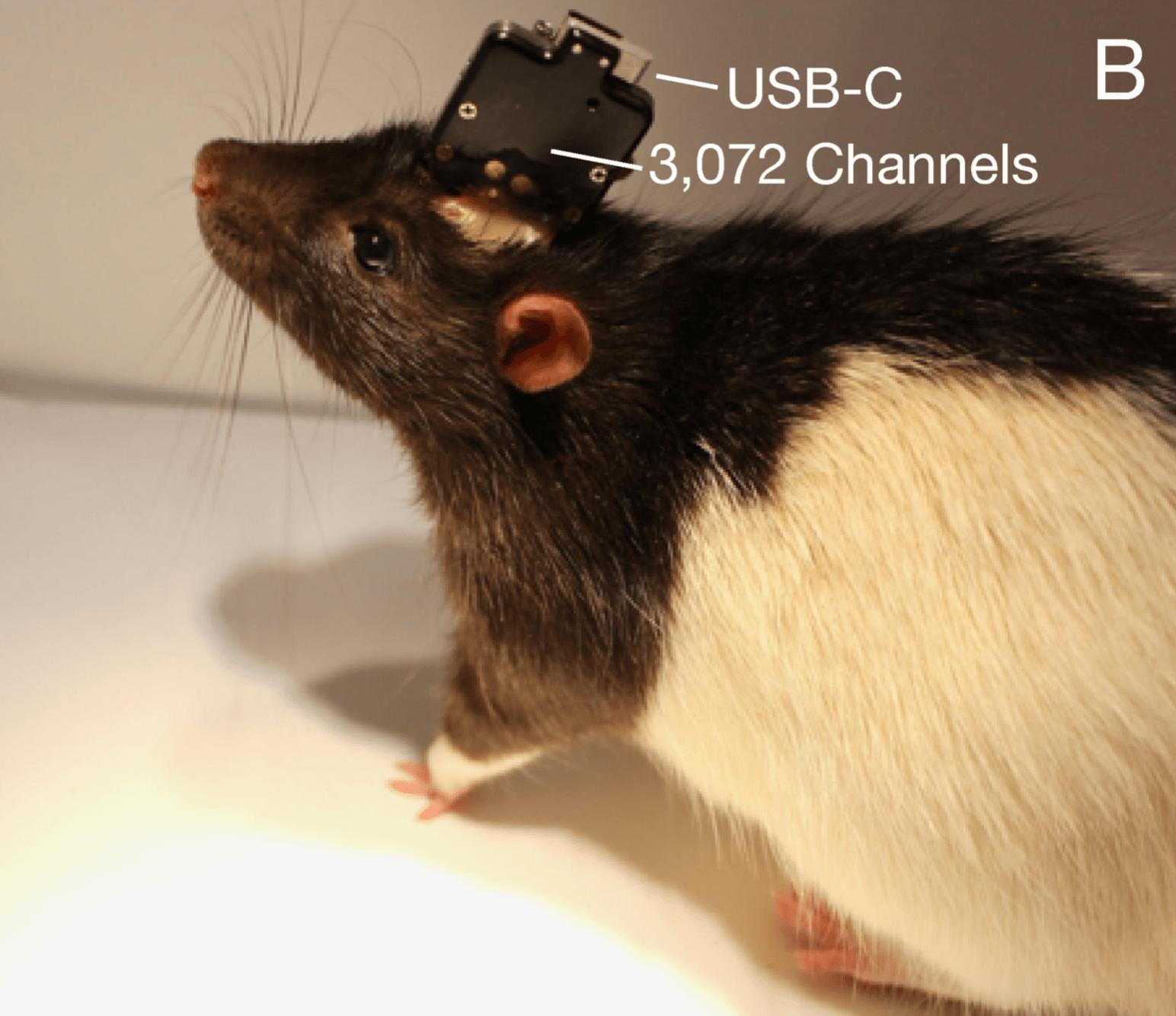 Илон Маск обнародовал планы Neuralink о «чтении мозгов» (screen shot 2019 07 16 at 7.23.29 pm)