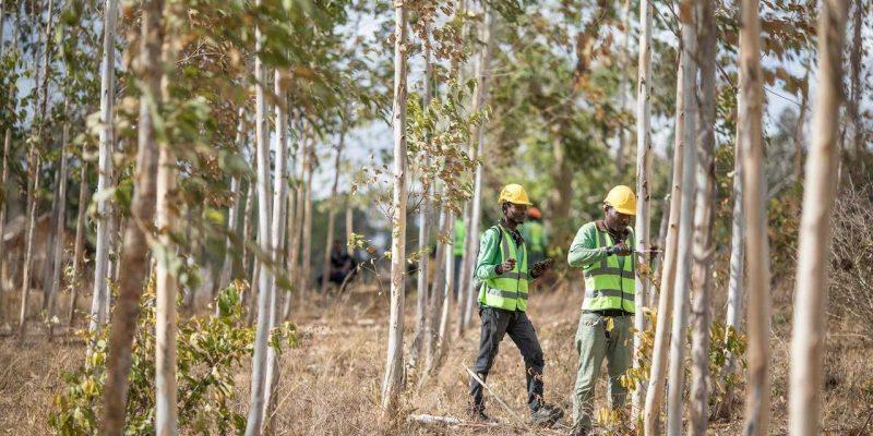 Apple создаст фонд Restore Fund на сумму 200 млн. долларов для инвестирования в лесохозяйственные проекты (41414 80353 restore fund xl)